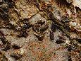 Щитовка яблонная запятовидная - На коре яблони. Фото: Стирманов А.В.