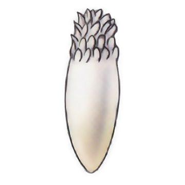 Муха яблонная - Яйцо. Использовано изображение: