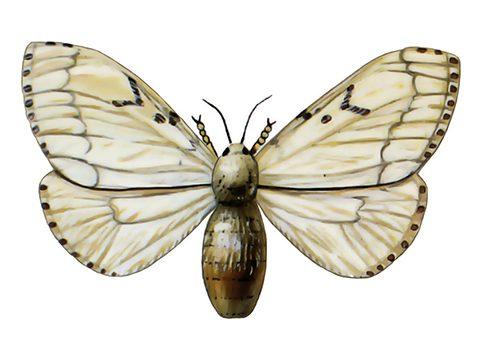 Шелкопряд  непарный - Имаго самки. Использовано изображение: