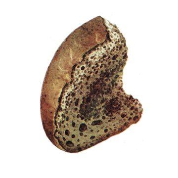 Таракан черный - Хлеб, поврежденный тараканами. Использовано изображение:[12]