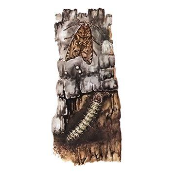 Листовертка подкоровая - Имаго и личинка на стволе. Использовано изображение:
