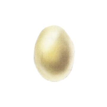 Моль картофельная - Яйцо. Использовано изображение:[13]