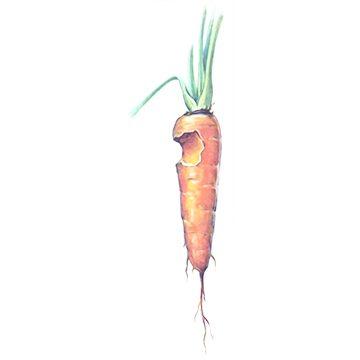 Совка озимая - Поврежденная морковь. Использовано изображение:[10]