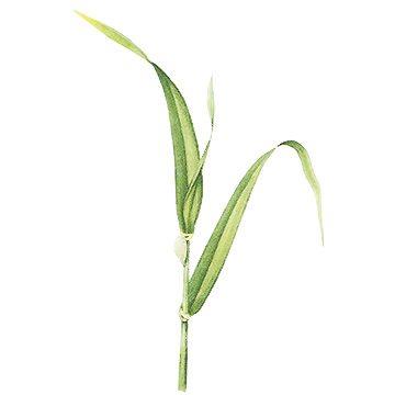 Пенница слюнявая - Пенница на стебле пшеници. Использовано изображение: