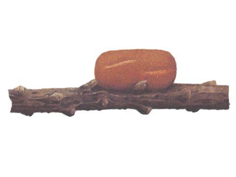 Пилильщик обыкновенный сосновый - Кокон. Использовано изображение: