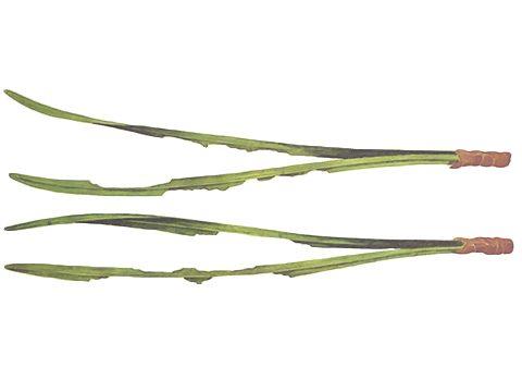 Пилильщик обыкновенный сосновый - Повреждения. Использовано изображение: