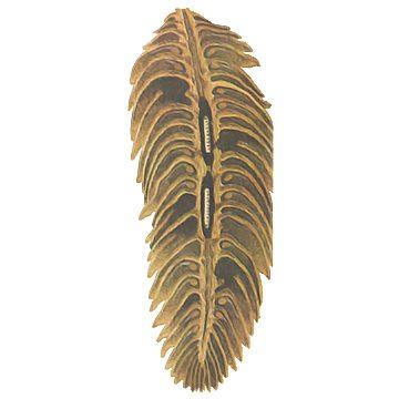 Листовертка еловая шишковая - Поврежденная шишка в разрезе. Использовано изображение: