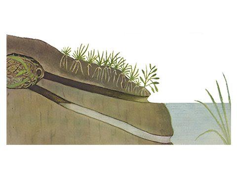Полевка (крыса) водяная - Гнездо. Использовано изображение: