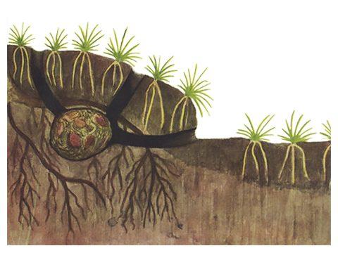 Мышь полевая - Гнездо. Использовано изображение: