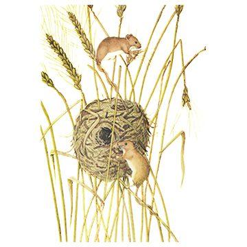 Мышь-малютка - Гнездо и повреждения. Использовано изображение: