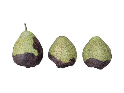 Плоды груши для лечения простатита клизма из ромашки простатит
