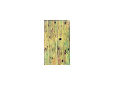 Ржавчина карликовая ячменя - Деталь листа ячменя с телейтопустулами, покрытыми эпидермисом