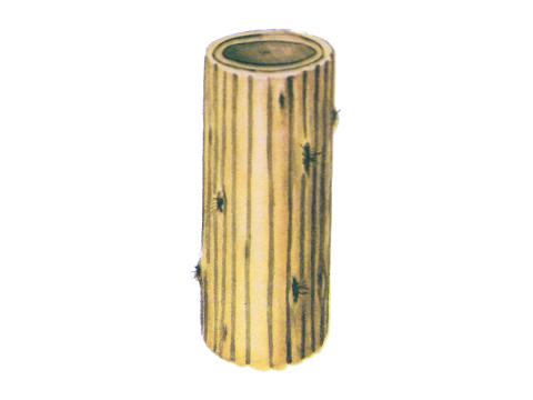 Пятнистость сетчатая ячменя - Сумчатая стадия на стебле ячменя