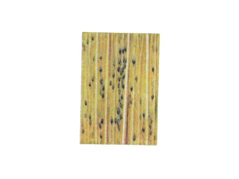 Ржавчина бурая листовая пшеницы - Деталь листа с телейтопустулами