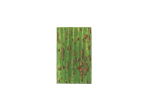 Ржавчина бурая листовая ржи - Деталь листа с уредопустулами
