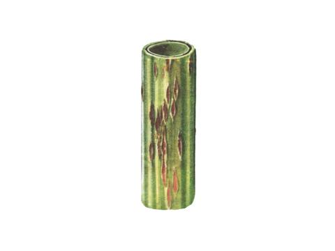 Ржавчина стеблевая (линейная) зерновых - Стебель пшеницы с уредопустулами