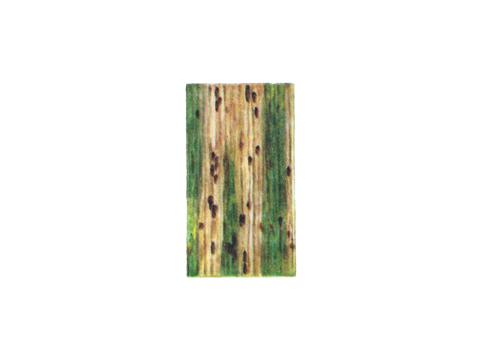 Ржавчина желтая зерновых культур - Деталь нижней стороны листьев пшеницы с темными телейтопустулами