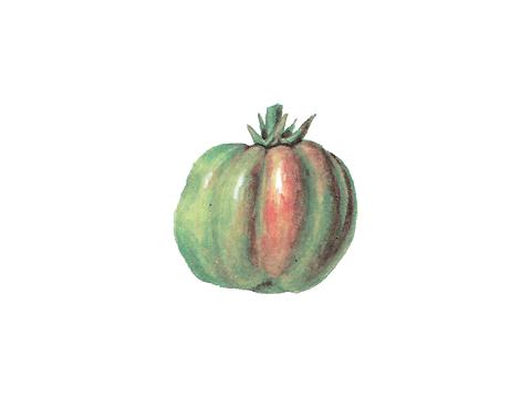 Столбур томата - Плоды неравномерно окрашены